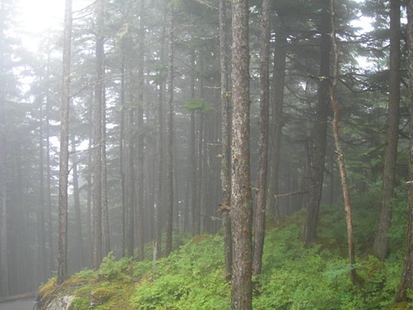 Clearing the Fog: 5 Ways Craniosacral Techniques  Combat Dementia and Alzheimer's